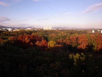 20191201-万博公園1.jpg