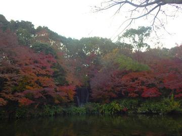 20191201-万博公園3.jpg