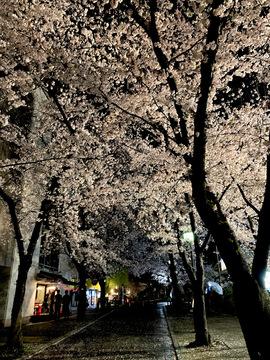 gionshirkawa-2021-2.jpg