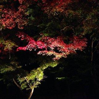 kiyomizu-fall-4.jpg