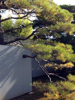 kyotogosho-7.jpg