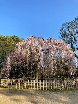 kyotogyoen-2021-3.jpeg