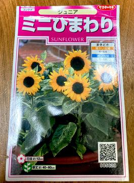 mini-himawari-junoir000.jpeg