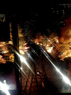 momiji-tunnel-1.jpg