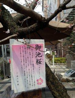 oikesakura-guide.jpg